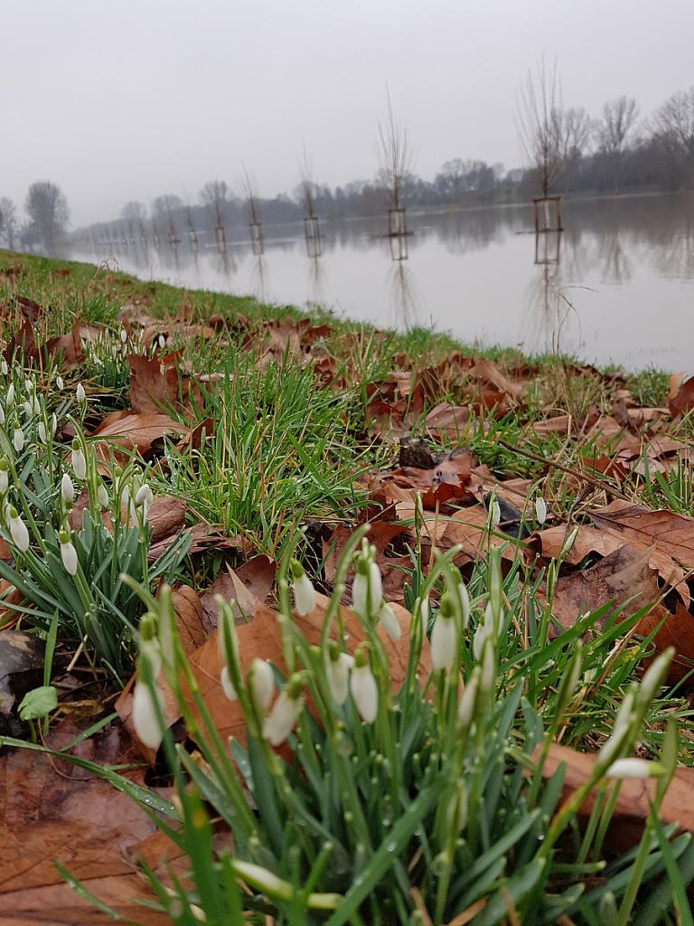 Neckarhochwasser @laufkatrinlauf.de